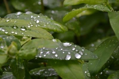 Offre spéciale sur les Hydrofuges de la boutique Biochim Industrie